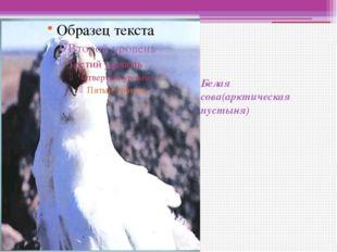 Белая сова(арктическая пустыня)