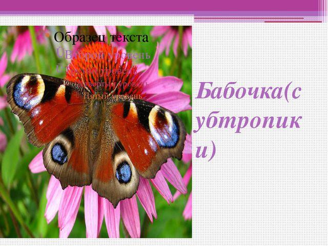 Бабочка(субтропики)