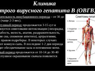 Клиника острого вирусного гепатита В (ОВГВ) Продолжительность инкубационного