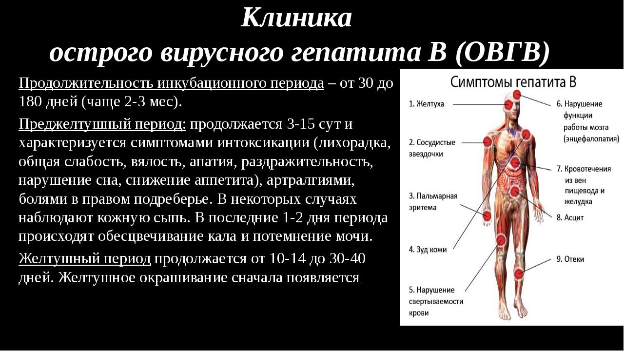 Клиника острого вирусного гепатита В (ОВГВ) Продолжительность инкубационного...