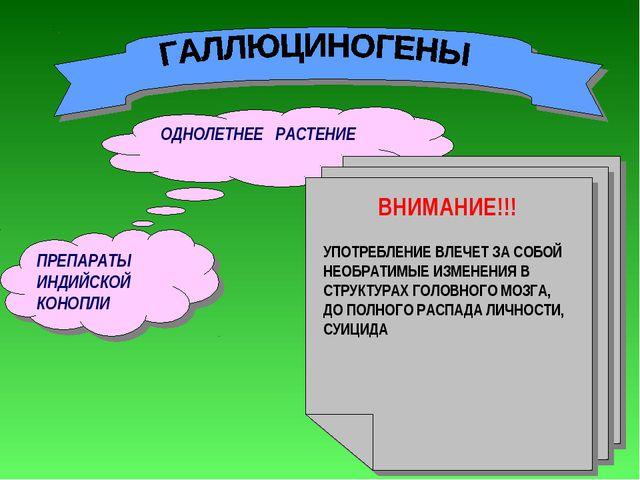 ПРЕПАРАТЫ ИНДИЙСКОЙ КОНОПЛИ ОДНОЛЕТНЕЕ РАСТЕНИЕ МАРИХУАНА, ГАШИШ, АНАША, ЛСД...