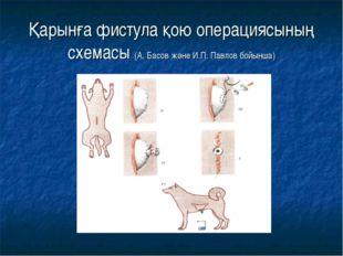 Қарынға фистула қою операциясының схемасы (А. Басов және И.П. Павлов бойынша)