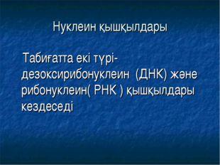 Нуклеин қышқылдары Табиғатта екі түрі-дезоксирибонуклеин (ДНК) және рибонукле