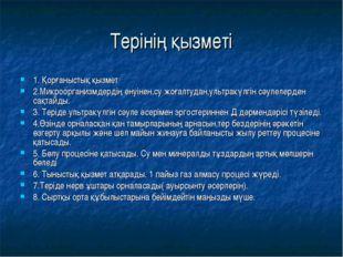 Терінің қызметі 1. Қорғаныстық қызмет 2.Микроорганизмдердің енуінен,су жоғалт