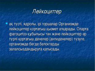 Лейкоциттер ақ түсті, ядролы, ірі торшалар Организмде лейкоциттер корғағыш қы