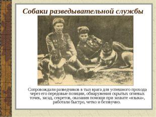 Собаки разведывательной службы Сопровождали разведчиков в тыл врага для успеш