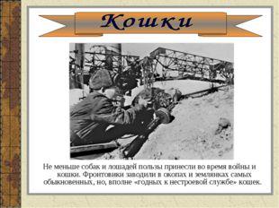 Не меньше собак и лошадей пользы принесли во время войны и кошки. Фронтовики
