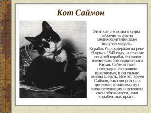 Кот Саймон Этот кот с военного судна «Аметист» флота Великобритании даже полу