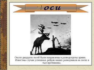 Около двадцати лосей были направлены в разведотделы армии. Известны случаи ус