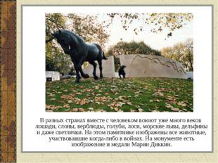 В разных странах вместе с человеком воюют уже много веков лошади, слоны, вер