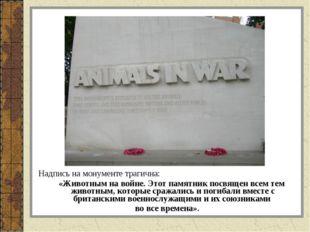 Надпись на монументе трагична: «Животным на войне. Этот памятник посвящен все