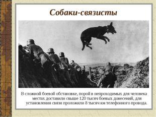 Собаки-связисты В сложной боевой обстановке, порой в непроходимых для человек