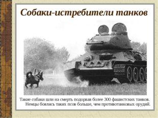 Собаки-истребители танков Такие собаки шли на смерть подорвав более 300 фашис