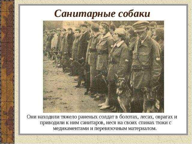 Санитарные собаки Они находили тяжело раненых солдат в болотах, лесах, оврага...