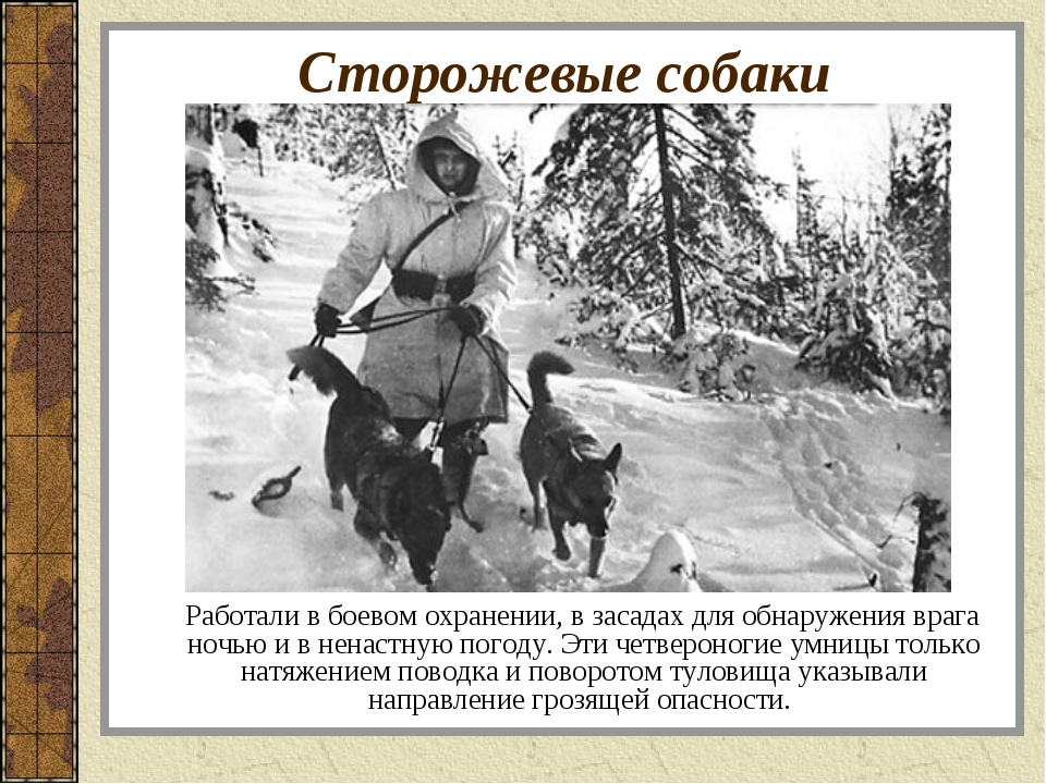 Сторожевые собаки Работали в боевом охранении, в засадах для обнаружения враг...
