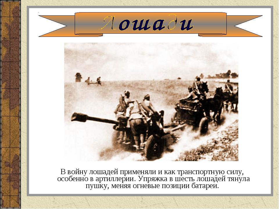 В войну лошадей применяли и как транспортную силу, особенно в артиллерии. Уп...