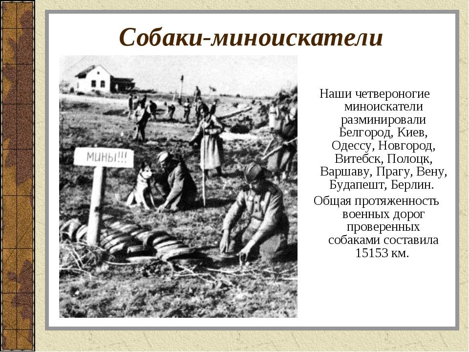 Собаки-миноискатели Наши четвероногие миноискатели разминировали Белгород, Ки...