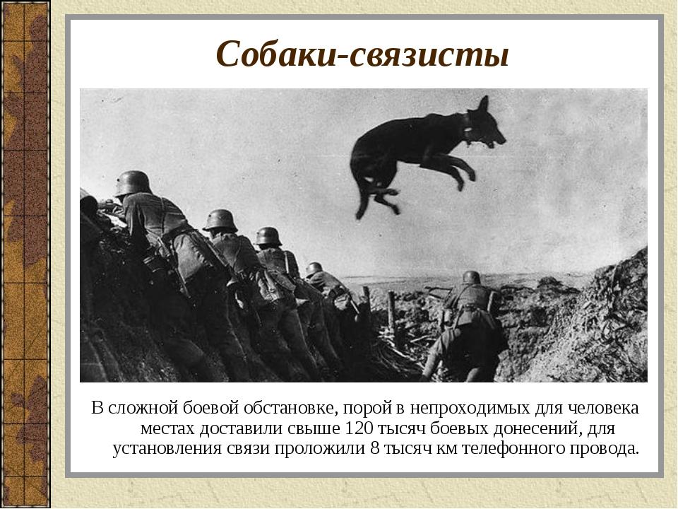 Собаки-связисты В сложной боевой обстановке, порой в непроходимых для человек...