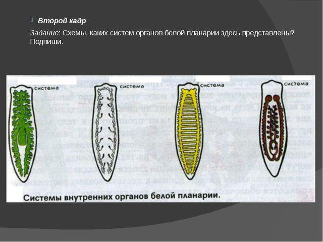 Второй кадр Задание: Схемы, каких систем органов белой планарии здесь предста...