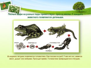 Лесные звери на разные лады приветствуют приход весны. У каждого животного по