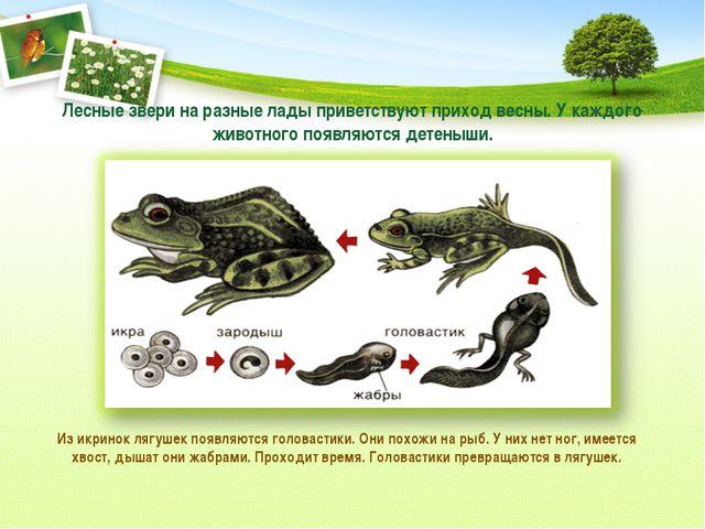 Лесные звери на разные лады приветствуют приход весны. У каждого животного по...