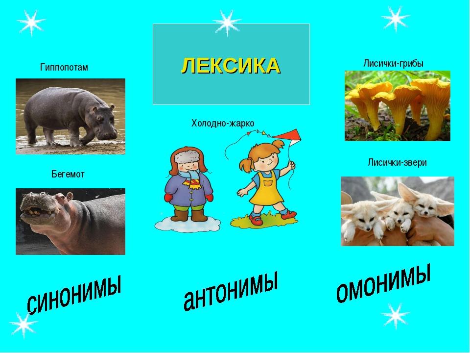 ЛЕКСИКА Гиппопотам Бегемот Лисички-грибы Лисички-звери Холодно-жарко