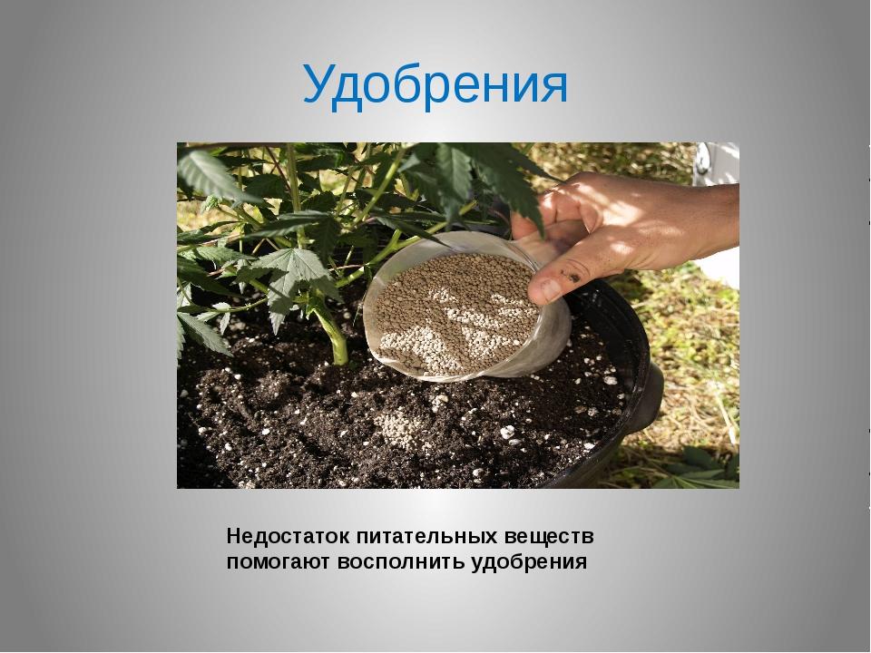 Удобрения Недостаток питательных веществ помогают восполнить удобрения