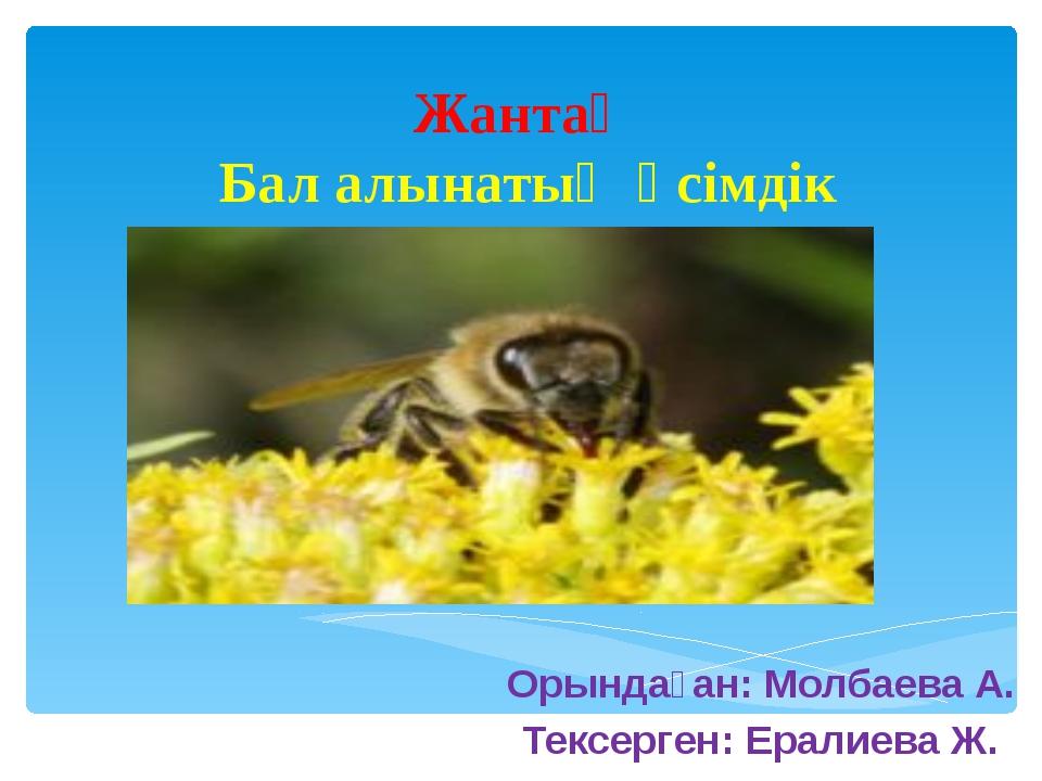 Жантақ Бал алынатың өсімдік Орындаған: Молбаева А. Тексерген: Ералиева Ж.