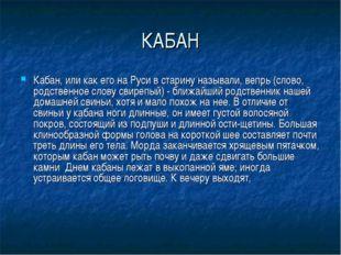 КАБАН Кабан, или как его на Руси в старину называли, вепрь (слово, родственно