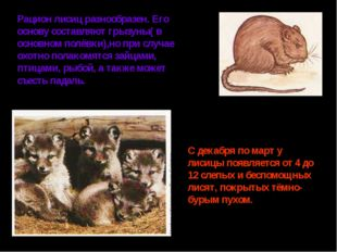 Рацион лисиц разнообразен. Его основу составляют грызуны( в основном полёвки)