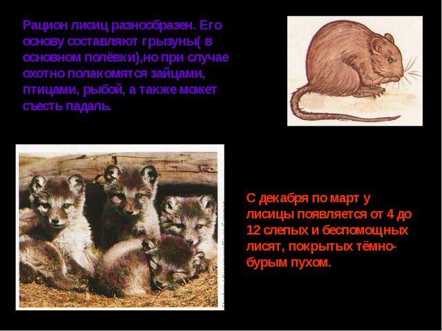 Рацион лисиц разнообразен. Его основу составляют грызуны( в основном полёвки)...