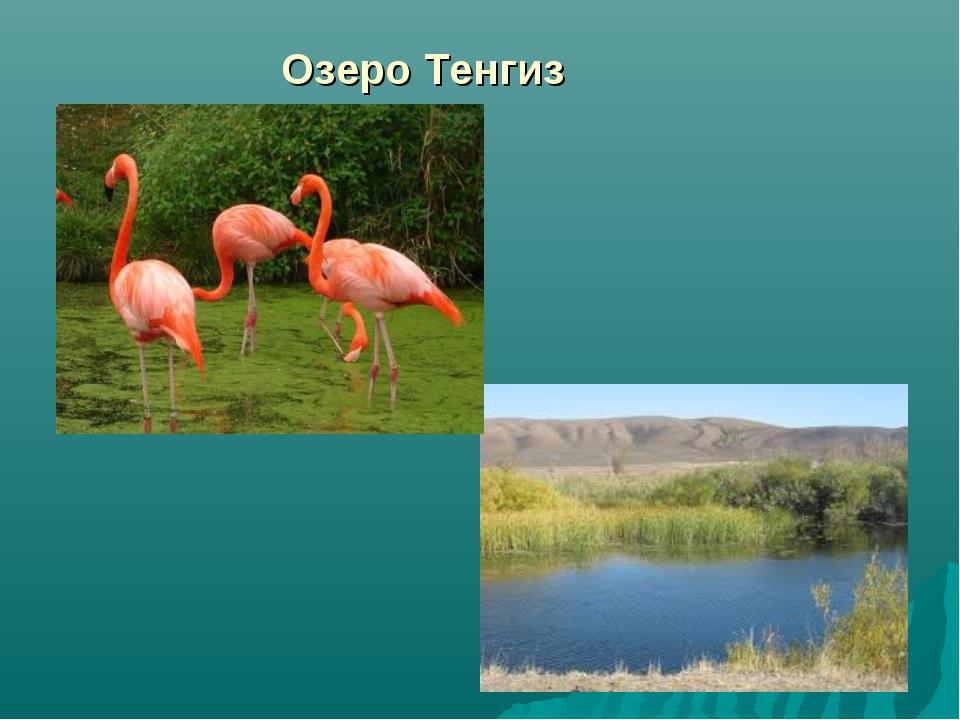 Озеро Тенгиз