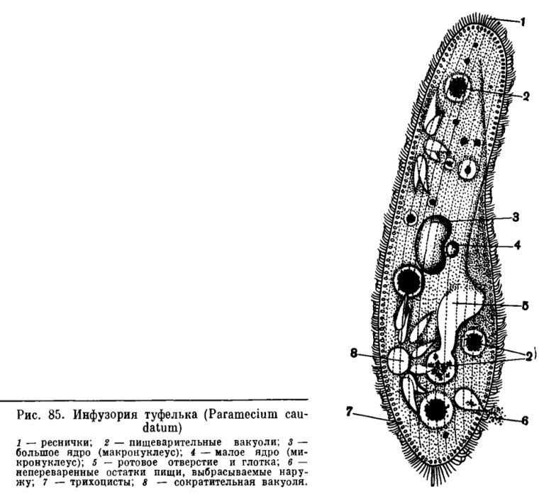 http://dic.academic.ru/pictures/enc_biology/animals/ris._1_85.jpg