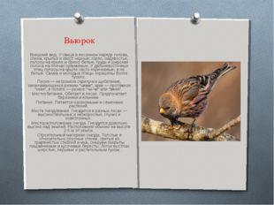 Вьюрок Внешний вид. У самца в весеннем наряде голова, спина, крылья и хвост ч