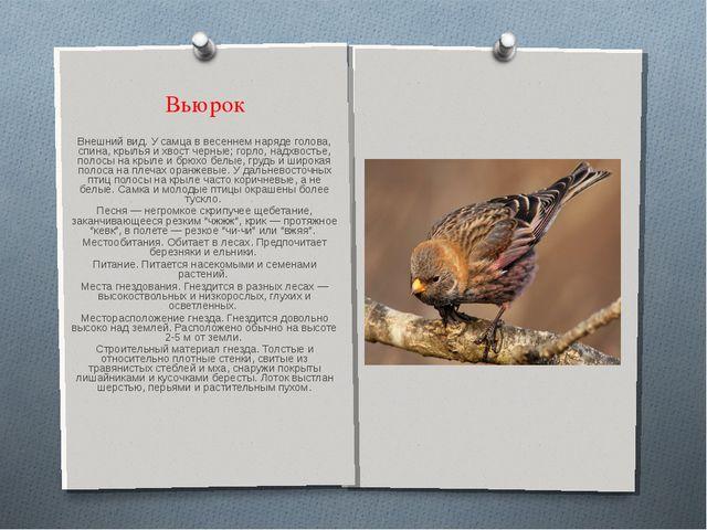 Вьюрок Внешний вид. У самца в весеннем наряде голова, спина, крылья и хвост ч...