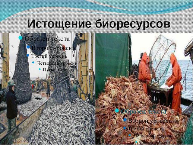 Истощение биоресурсов