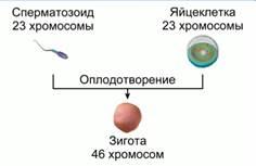 http://static.interneturok.cdnvideo.ru/content/konspekt_image/185373/ae5acc90_8550_0132_69bb_12313c0dade2.jpg