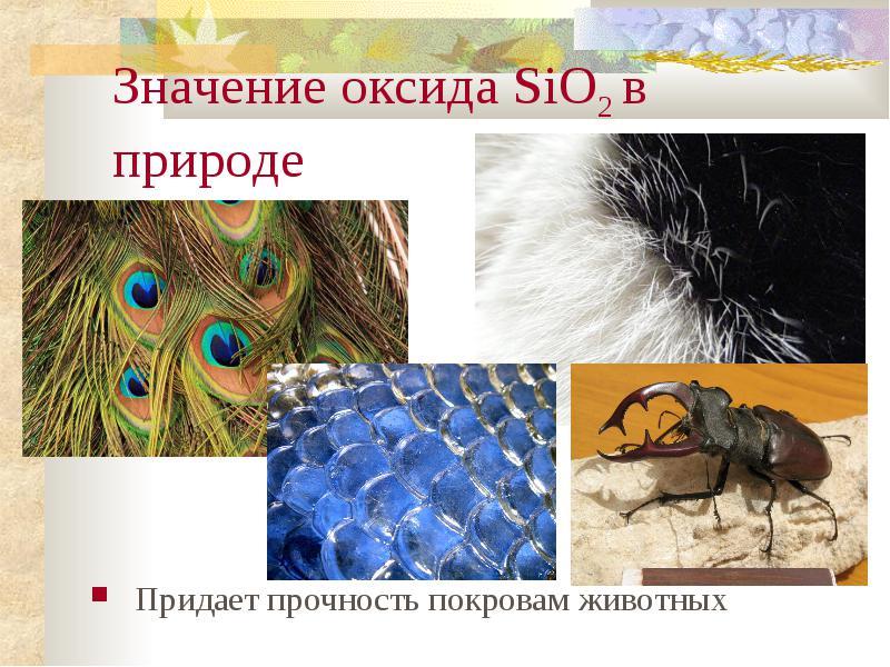 http://znanie.podelise.ru/tw_files2/urls_363/10/d-9818/img17.jpg