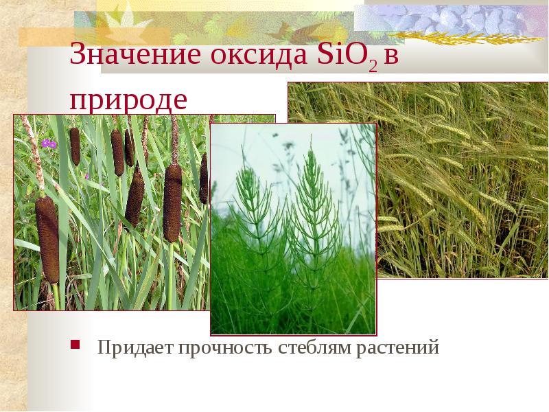 http://znanie.podelise.ru/tw_files2/urls_363/10/d-9818/img16.jpg