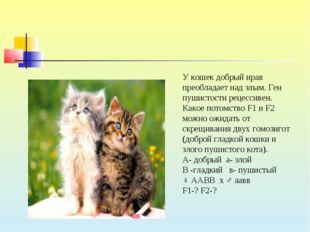 У кошек добрый нрав преобладает над злым. Ген пушистости рецессивен. Какое по