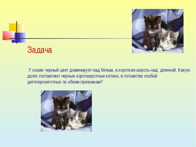 У кошек черный цвет доминирует над белым, а короткая шерсть над длинной. Как...