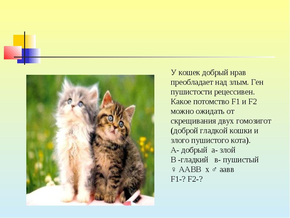 У кошек добрый нрав преобладает над злым. Ген пушистости рецессивен. Какое по...