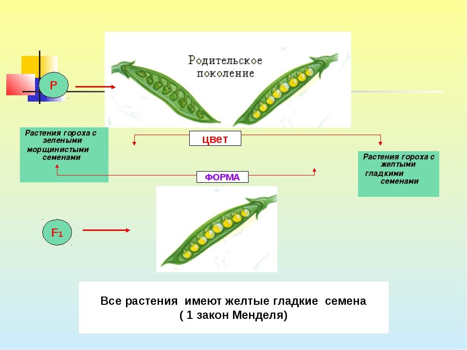 Растения гороха с зелеными морщинистыми семенами Растения гороха с желтыми гл...