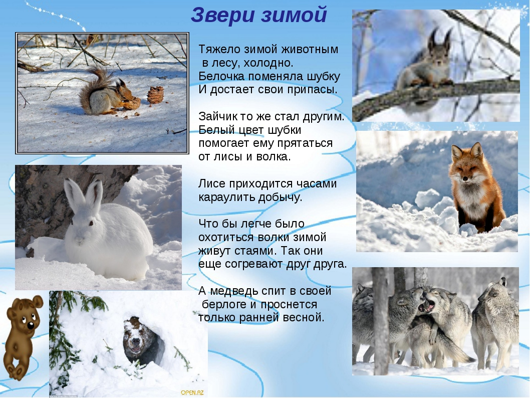 Звери зимой Тяжело зимой животным в лесу, холодно. Белочка поменяла шубку И д...