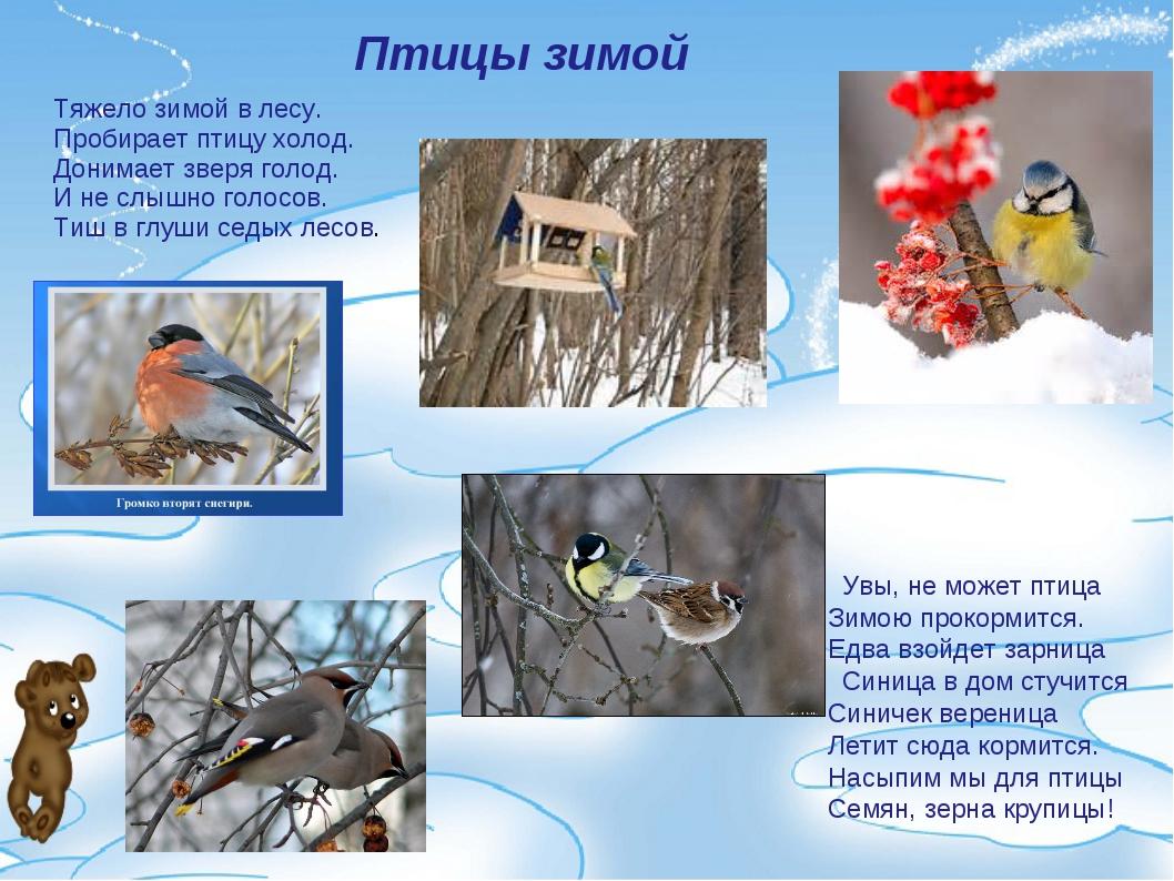 Птицы зимой    Увы, не может птица Зимою прокормится. Едва взойдет зар...