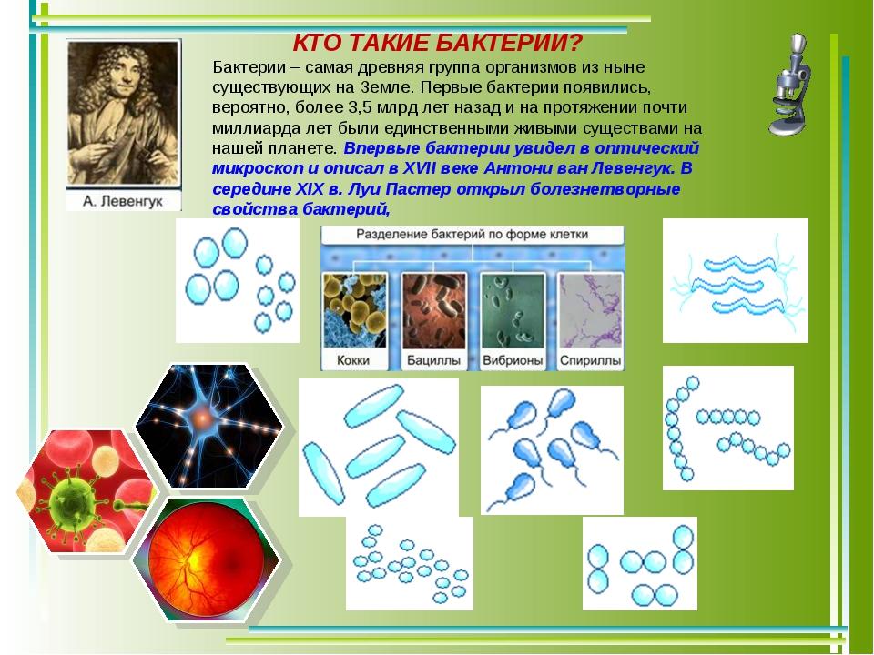 Бактерии – самая древняя группа организмов из ныне существующих на Земле. Пер...