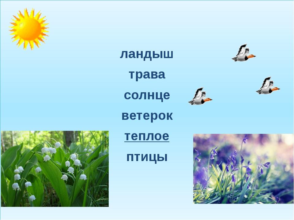 ландыш трава солнце ветерок теплое птицы