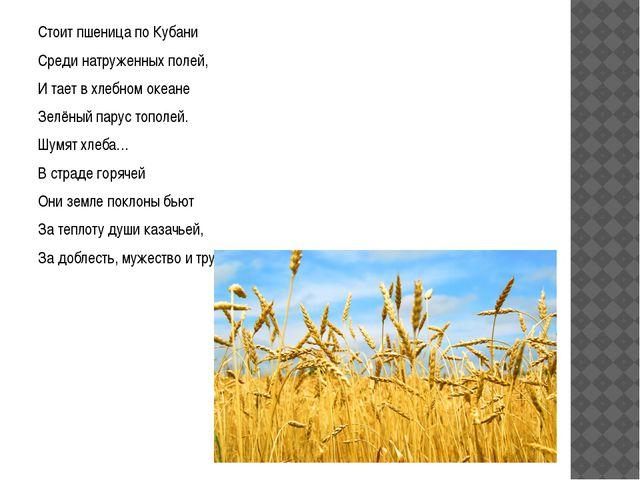 Стоит пшеница по Кубани Среди натруженных полей, И тает в хлебном океане Зел...