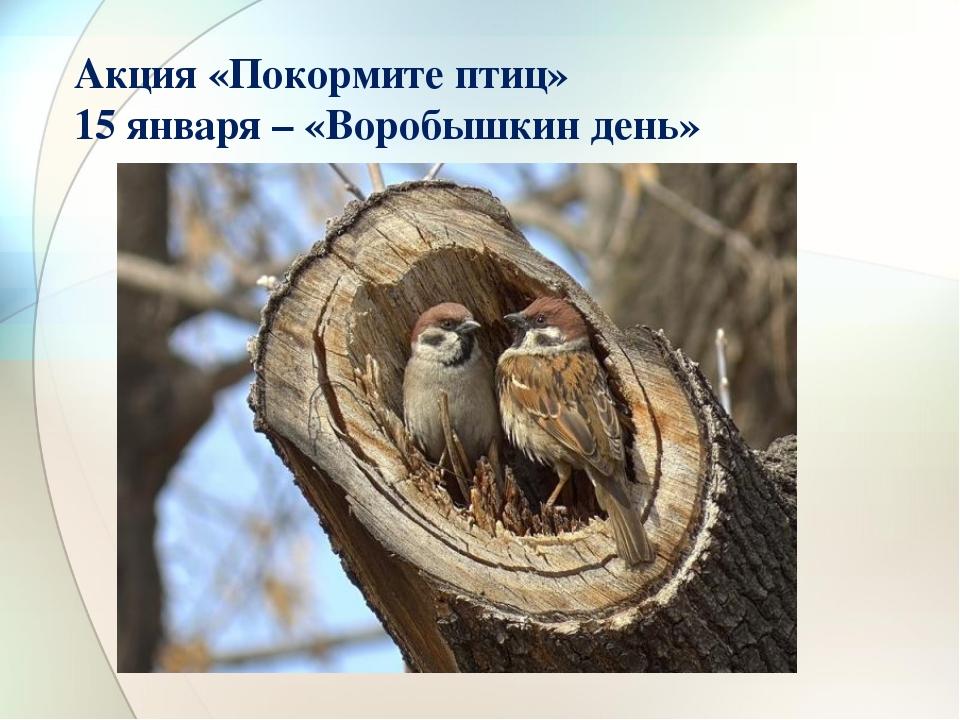 Акция «Покормите птиц» 15 января – «Воробышкин день»