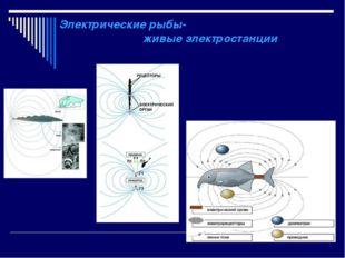 Электрические рыбы- живые электростанции